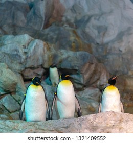 Three Emperor penguins stand in line side by side