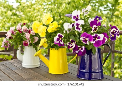 Three enamel jugs with pansy bouquets in different colors, colours