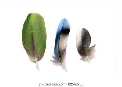 Three feathers isolated on the white background