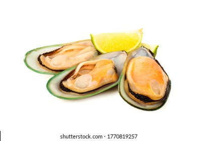 Three Female New Zealand greenshell mussels studio isolated on white background