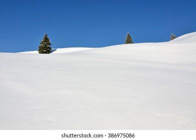 Three fir trees on snowy hills upon blue sky