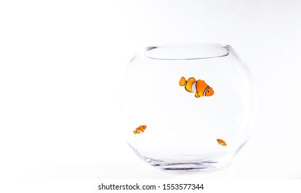 three fish in a fishbowl isolated and clean without water, where two small one looking up to the bigger one