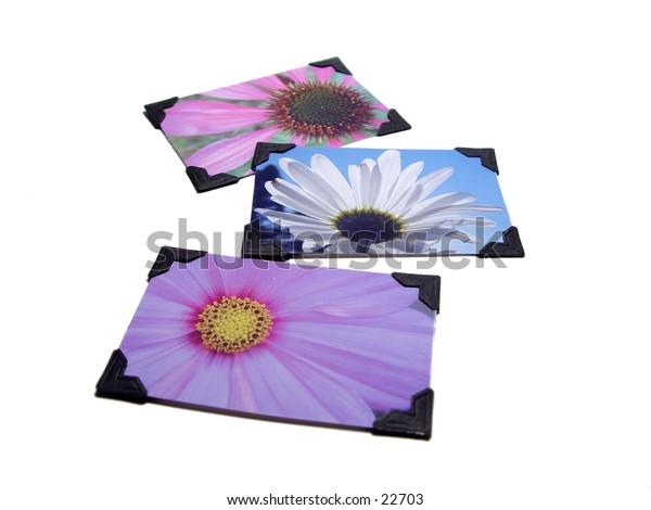 Three flower photos with black photo corners on them, isolated on white background