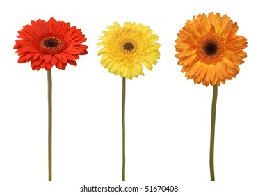 three flowers isolated on white