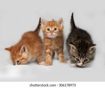 Three fluffy kitten sitting on gray background