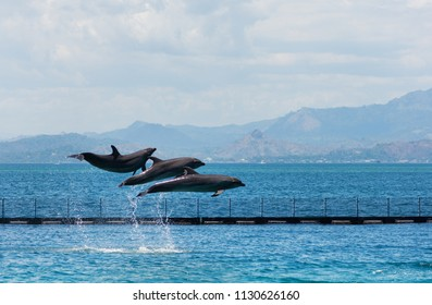 three flying bottle-nose dolphins