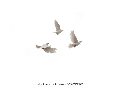 Three flying dove on a white background