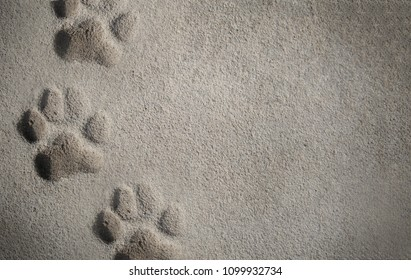 Three footprint of a dog on concrete floor.Top view.