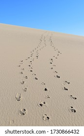 Three footprint tracks walk down a flat light colored sand dune in Death Valley with blue sky background.