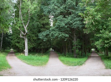 Three forest roads converge into one or diverge point of three ways. Gatchina, Russia