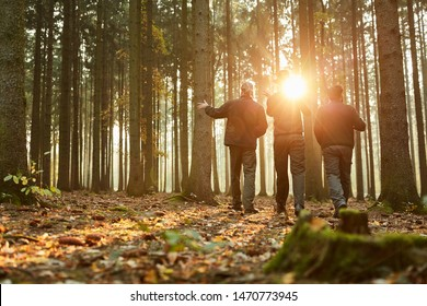 Three foresters in the woods during a walk or inspection in the evening sun