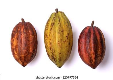 three fresh cocoa fruits, isolated