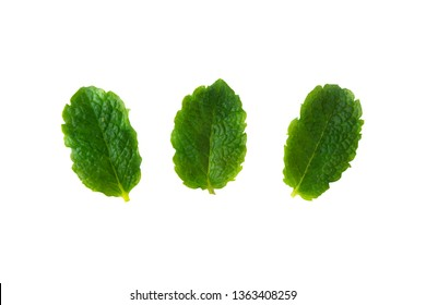 Three fresh mint isolated on white background. Leaves for coktails or fresh fruits. Summer tempalte for design, Food mockup