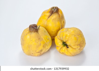 Three freshly harvested quinces on a dark background