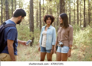 Three friends discussing something in a pine tree forest in the late afternoon sunshine while looking at the cell phone
