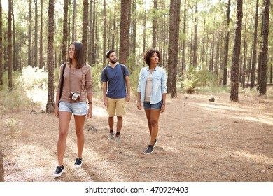 Three friends exploring a pine tree plantation in the afternoon sunshine, looking up while wearing casual clothing