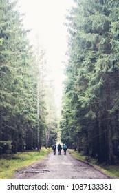 Three friends hiking through czech woods Brdy.