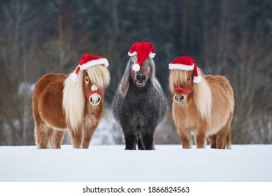 Three funny miniature shetland breed ponies dressed in Christmas Santa hats standing in a row on the snowy field in winter. Pet at Christmas.