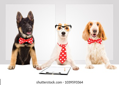 Three funny office dogs on the background of a banners