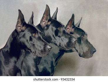 Three Generations of Great Dane Dogs