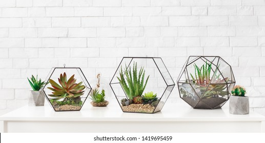 Three geometric florarium vases with succulent plants and cactuses in pots on table at white brick wall background, copy space. Green decor concept