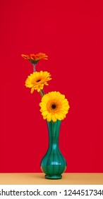 Three Gerbera  flowers, yellow and orange in green vase against bright crimson red background. Each flower head at different angle to the viewer.Genus of plants in the Asteraceae (daisy family).