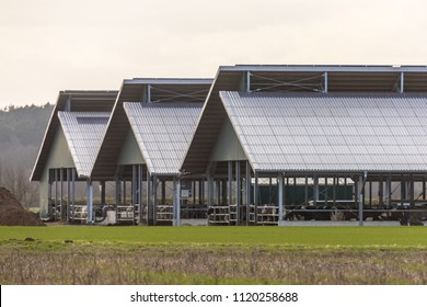 Three giant open cowshed barns at factory farm in Germany
