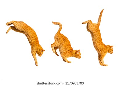 Three ginger jumping cats isolated on a white background.