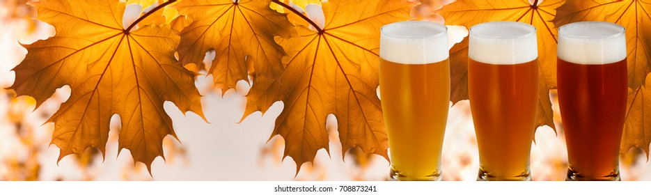Three glasses of Beer with foam against branch of maple with yellow autumn leaves.Lagers, Ales, Porter. Bier Festival. Oktoberfest Banner.