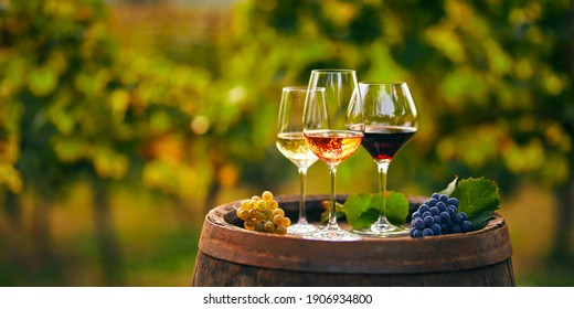 Three glasses with white, rose and red wine on a wooden barrel in the vineyard. Wide photo