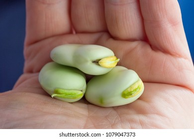 Three green beans in the hand