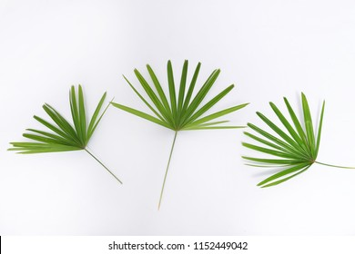 Three Green palm leaf close up isolated