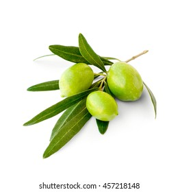 Three green ripe olives on branch, isolated
