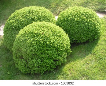 Three green sphere bushes