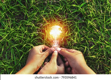 three hand holding light bulb on grass. eco concept power energy in nature