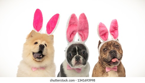 three happy dogs wearing easter bunny ears and bow ties on white background
