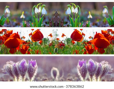 Three Header Site Springtime Flower Snowdrop Stock Photo Edit Now