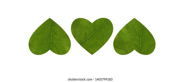 Three hearts carved from a leaf of a tree. Close-up. The concept of health, environmentally friendly, text. The element of decoration.