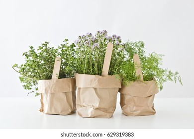 three herbs in bags on white background