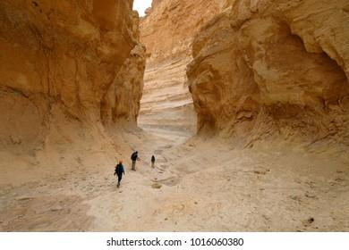 Three hikers traveling in deep dry gorge in Judea desert, Israel.