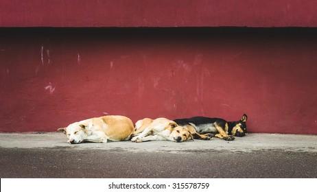 Three homeless stray dogs sleeping on the street