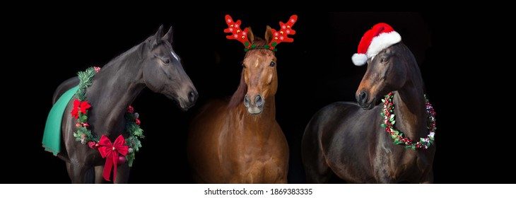 Three horse in christmas decoration against black background. Horses New Year banner