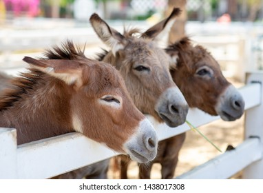 Three Horse or donkey in the farm. Head of Couple brown Horse or donkey in the stall. Horse or donkey lover and third party. Pet love triangle concept. Love third party concept. pet sad concept.
