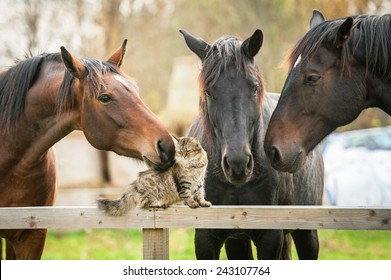 Three horses and cat