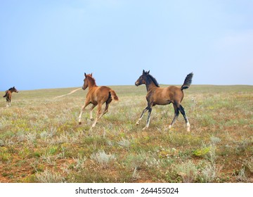 Three horses, foals running free in the field