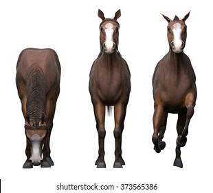 Horse front view images stock photos vectors shutterstock three horses front view sciox Choice Image