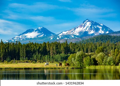 Three horses grazing in a central Oregon meadow near Sisters with the three sisters mountains in the background