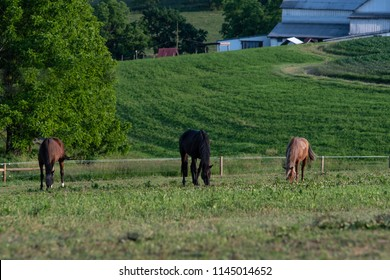 Three horses grazing in evening light with barns from a farm in the background in Appalachia