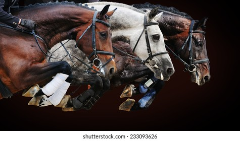 Three horses in jumping show, on brown background with gradient