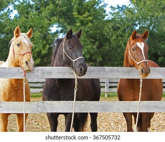 Three horses looking over a fence